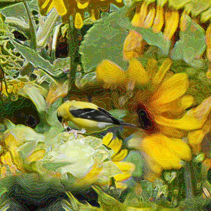 David Blow, Canary Summer A, 2015  Photograph, 7 x 7 in.  $300