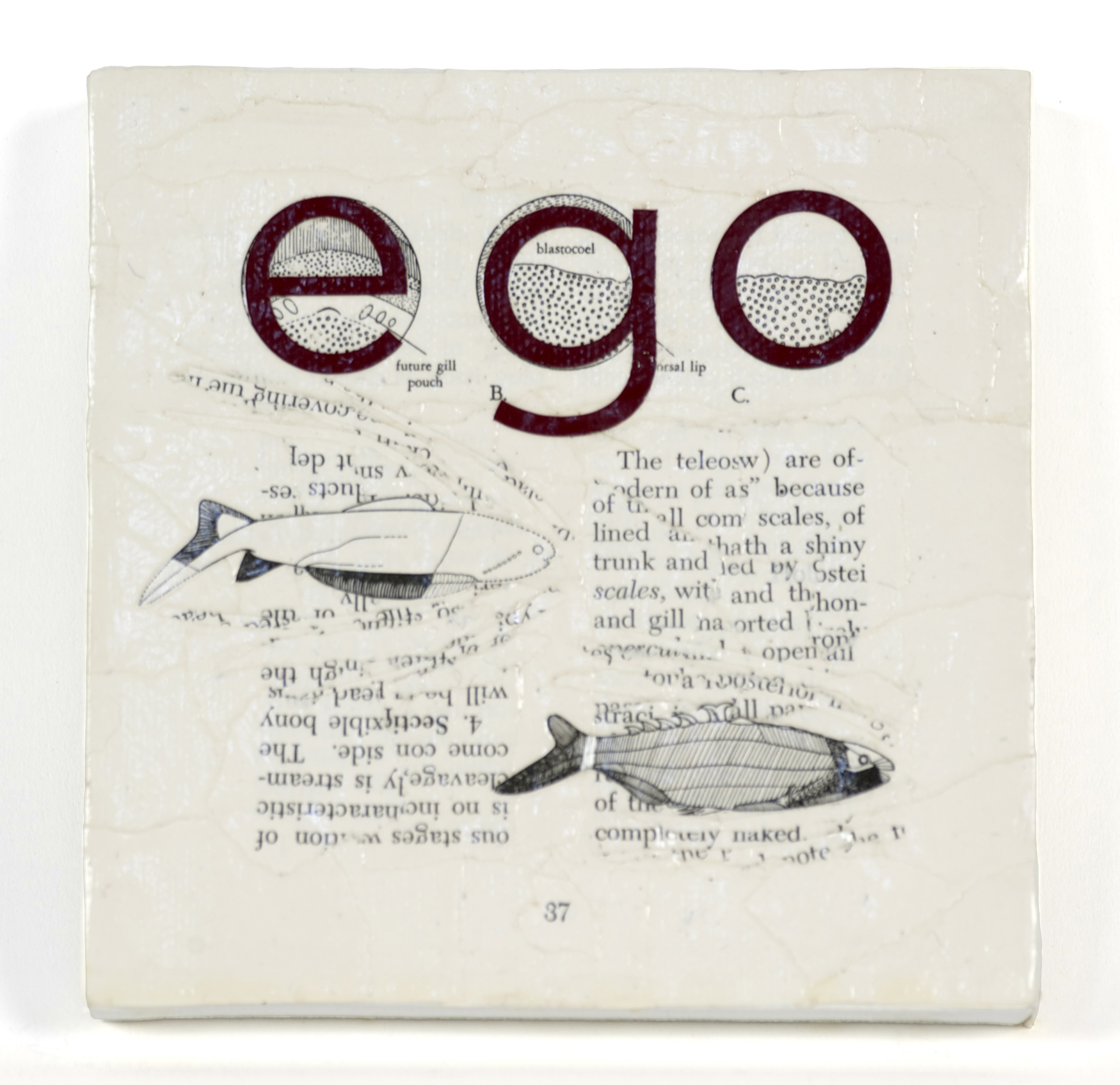 Natasha Lewandrowski     Ego , 2010  Paper collage and vinyl letters on canvas