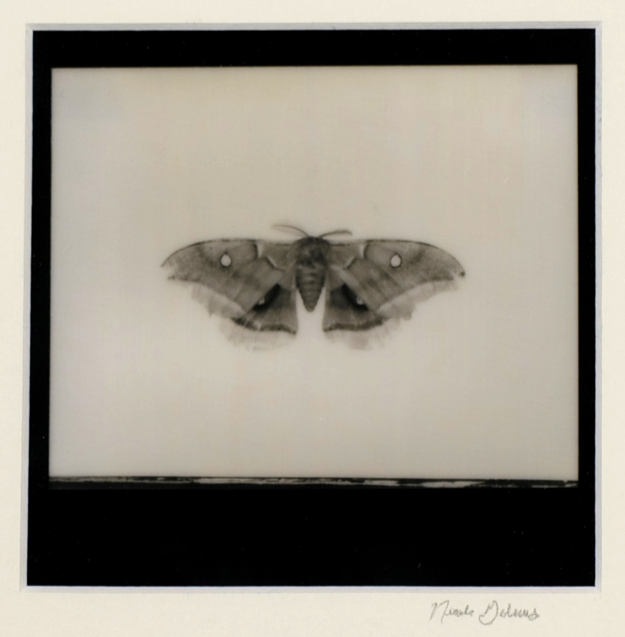 Nicole Gelinas     Remnants   –   Moth , 2012  Polaroid photography