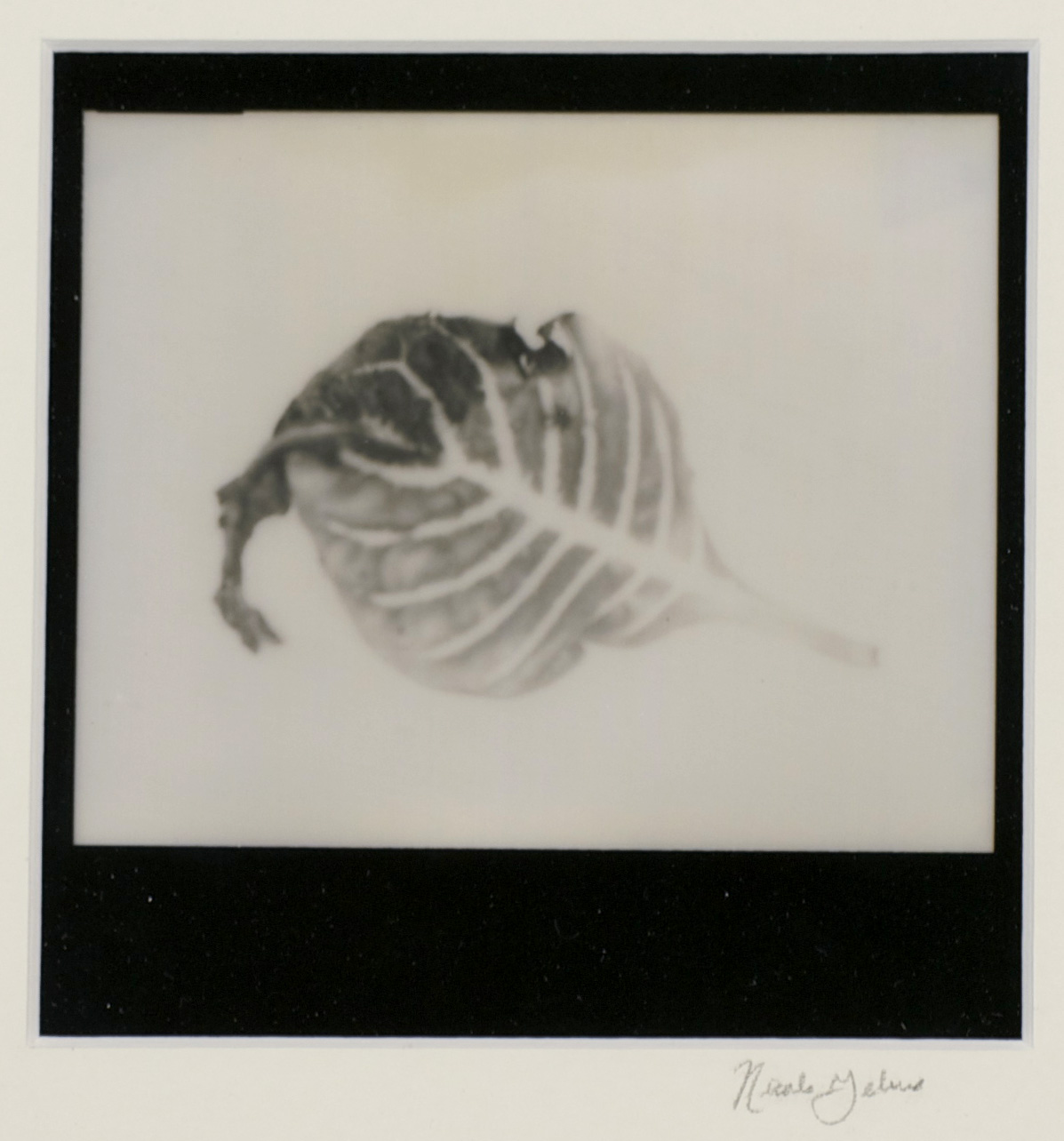 Nicole Gelinas     Remnants   –   Leaf , 2012  Polaroid photography