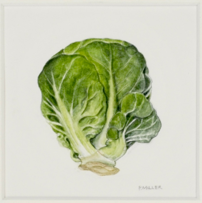 Peggy Miller     Brussel Sprout , 2007  Watercolor on paper