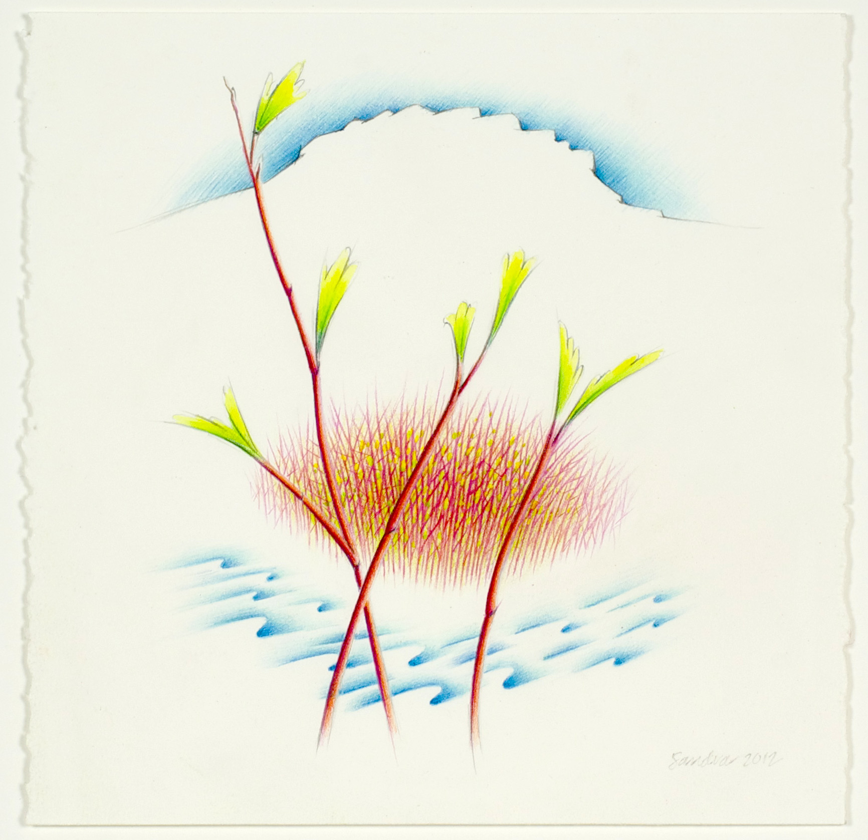 Sandra Dean     Butte, Creek, Red Osier Dogwood , 2012  Colored pencil and acrylic