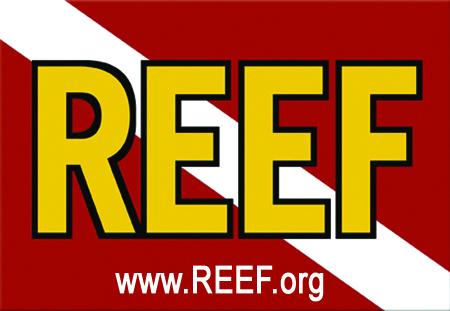 newREEF_logo.jpg
