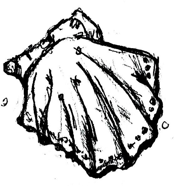 shell drawing 2.jpg