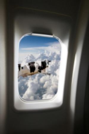 © Leaf   Dreamstime.com - Flying Cow Photo