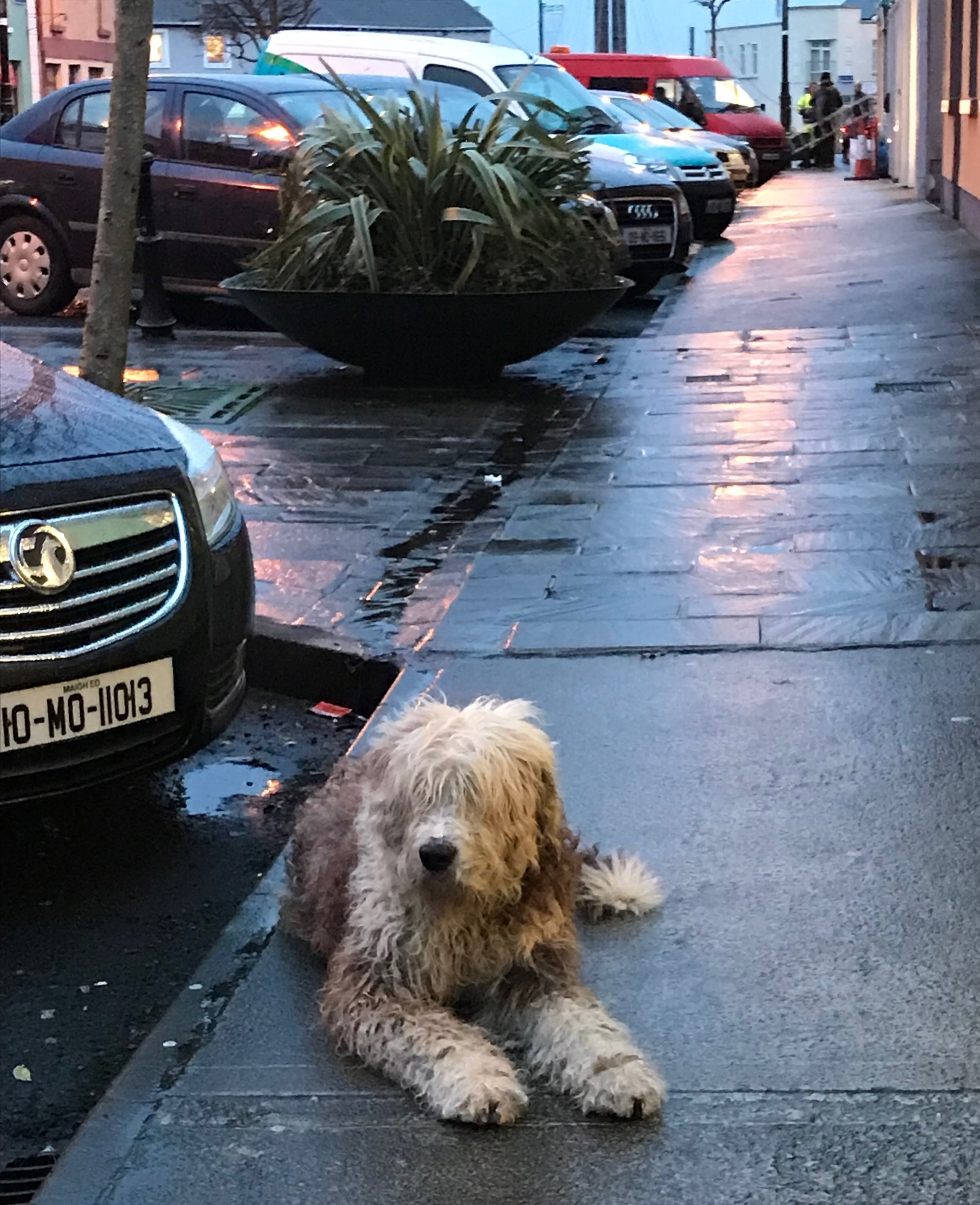 Dogs stay close to the owner's shop