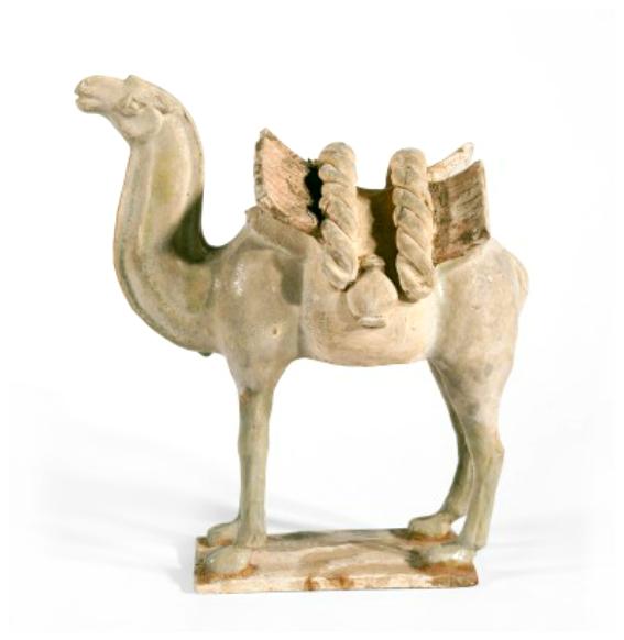 Standing Bactrian camel