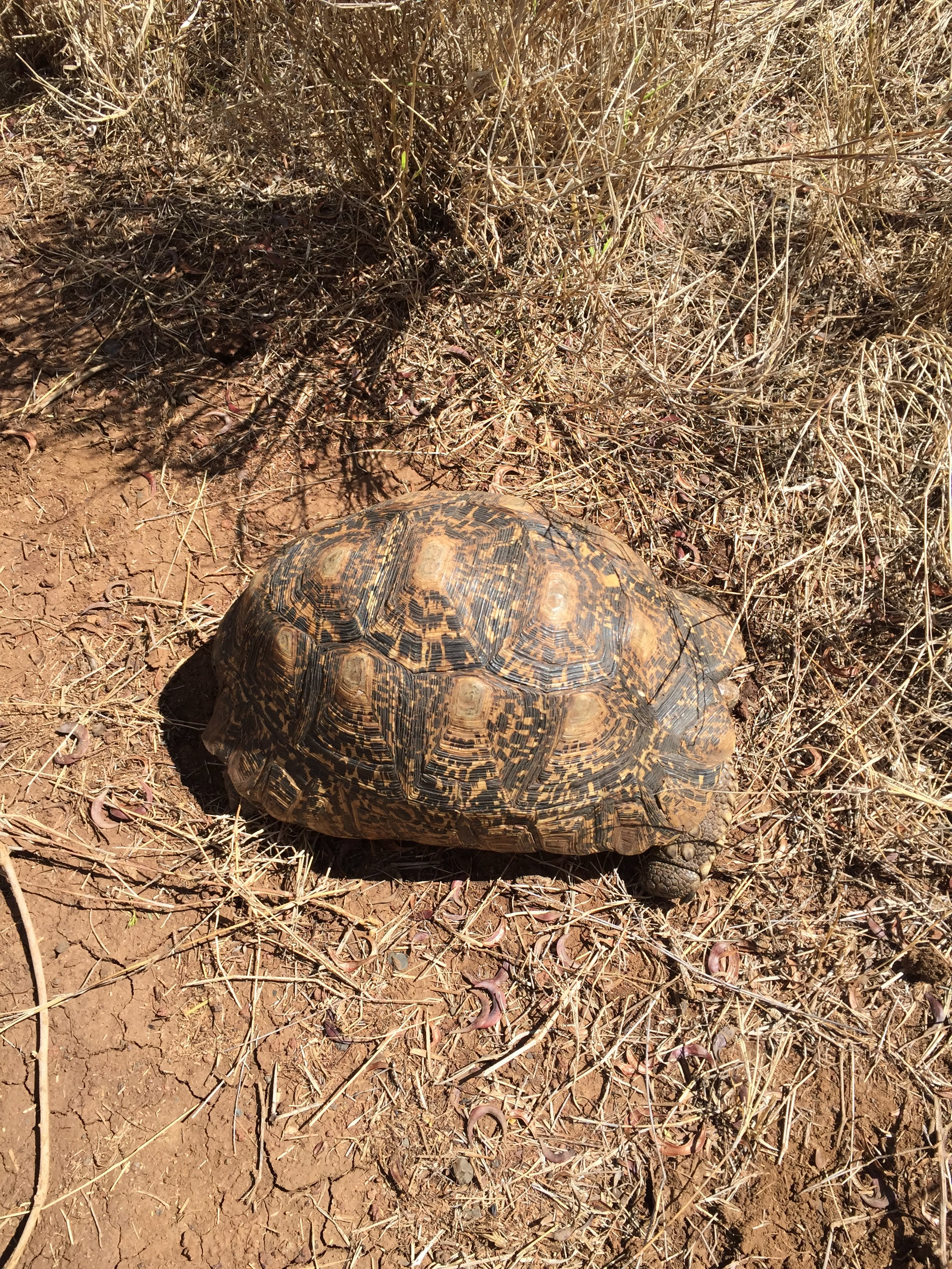 A friendly tortoise joined us for lunch.