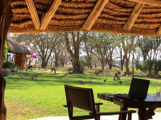 Open-air workspace: office, dining table and our monkey and impala neighbours graze nearby.