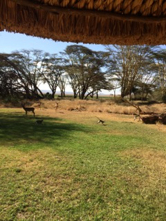 daily visitors of monkeys and impalas as we work, eat or exercise