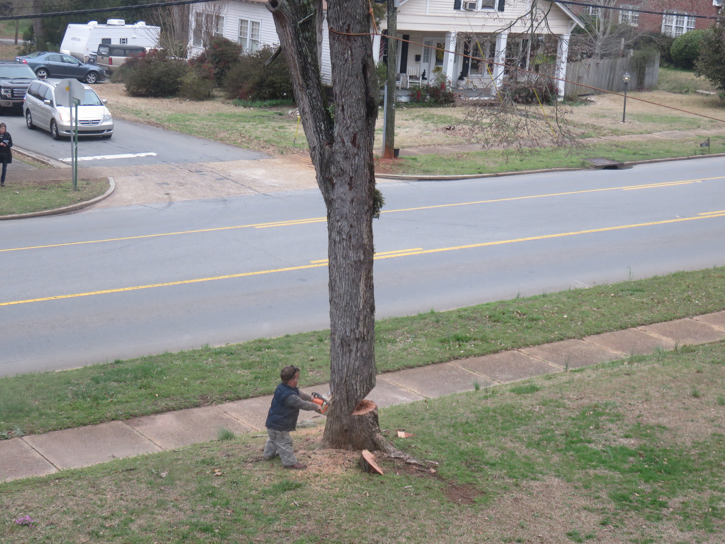 Trent attempting to cut down a tree