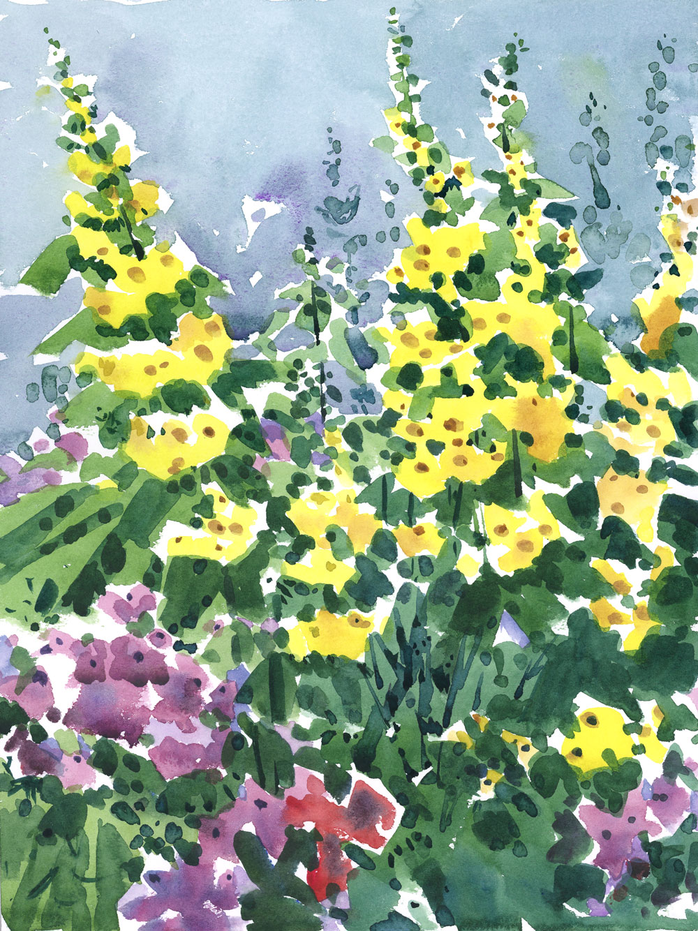 YellowLoosestrife.jpg