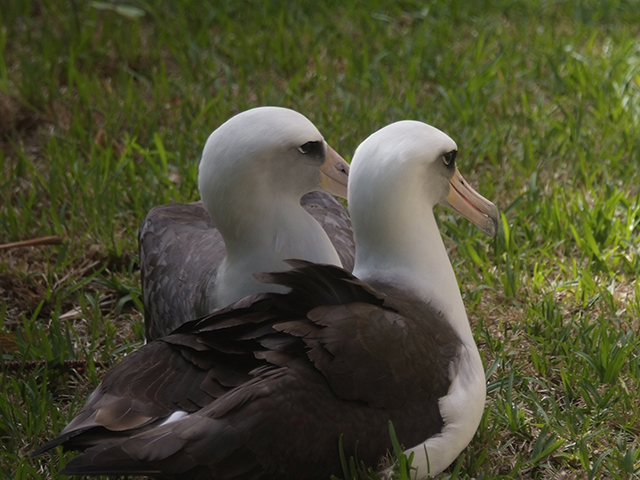 5. Later they settled down to spend some time together.