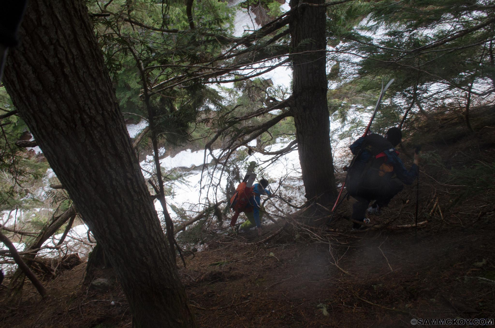 Steep sidehill above Mobbs Creek