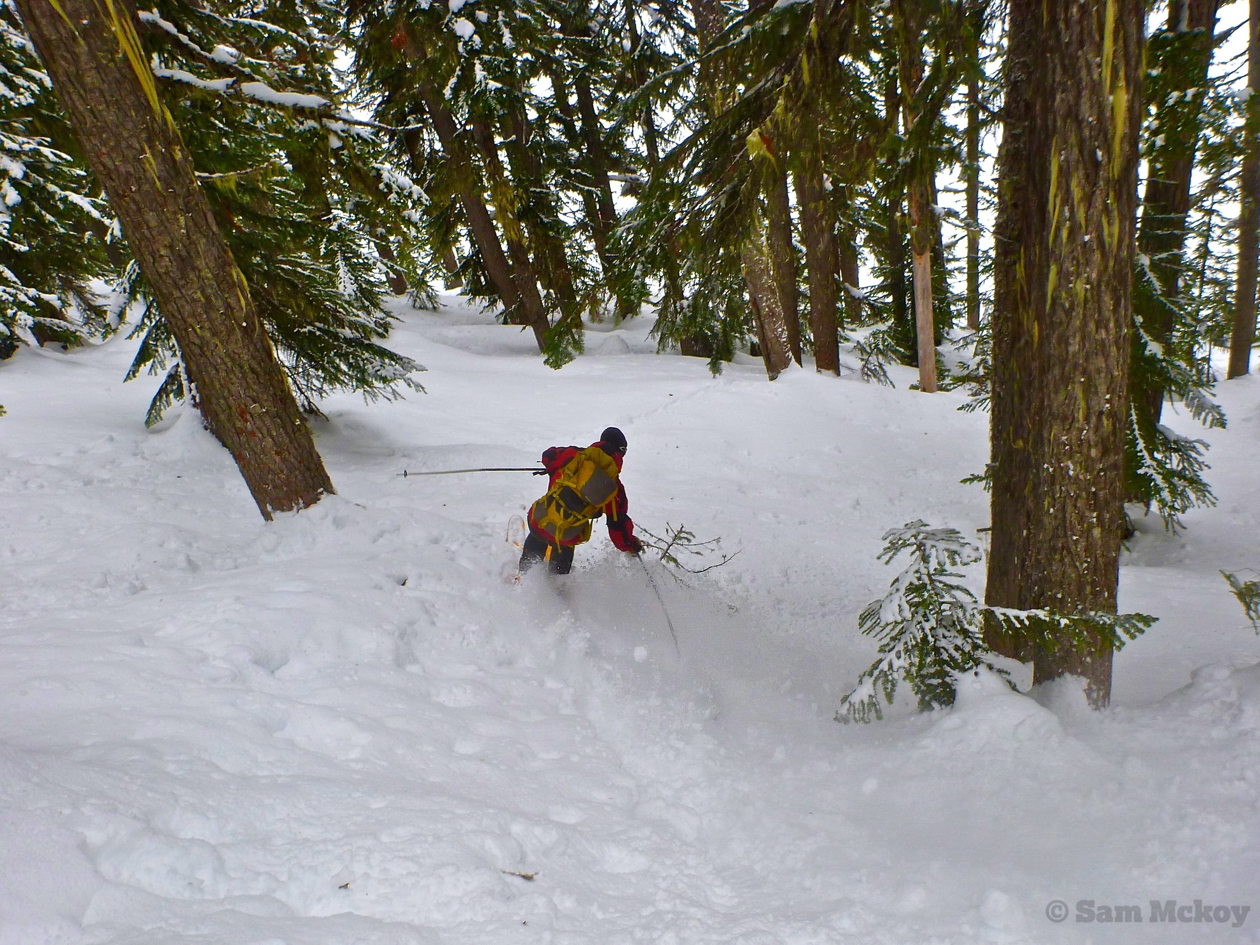 Skiing some great oldgrowth near Chief Pascal