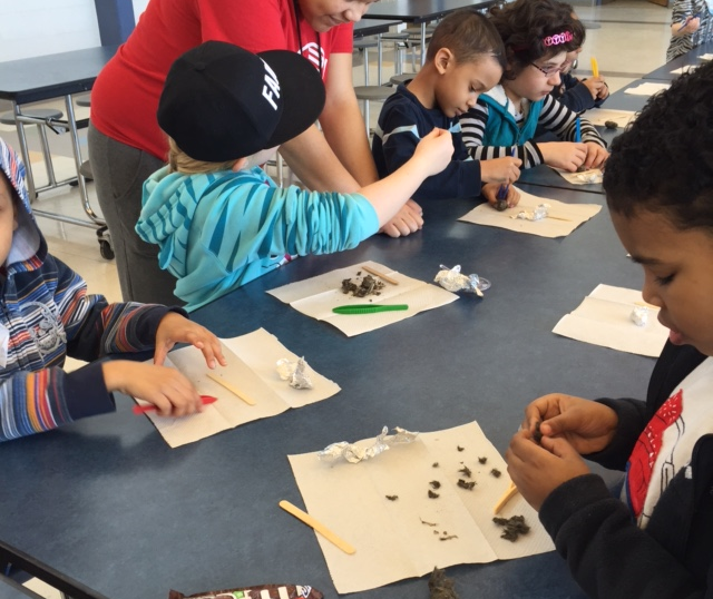 DISSECTING OWL PELLETS AND RECONSTRUCTING SKELETONs OF PREY