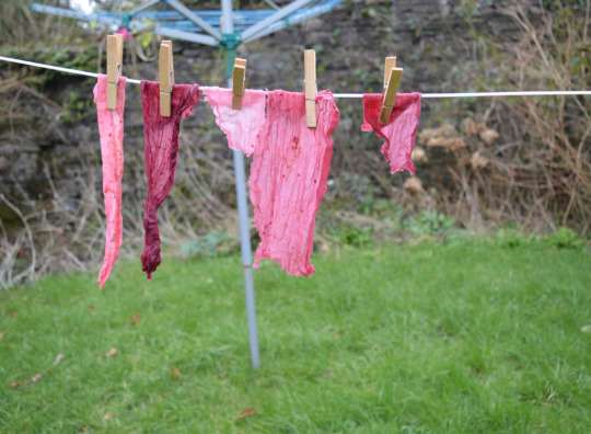 * Fruit dyed fabric by Aneira Davies PC: seamwork.com