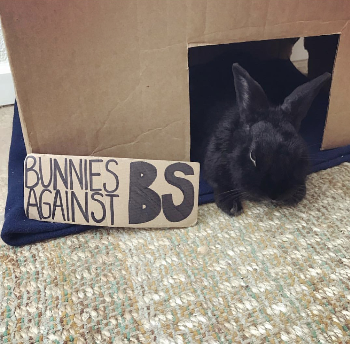 Klaus wants humans to use their voice for those who have none!