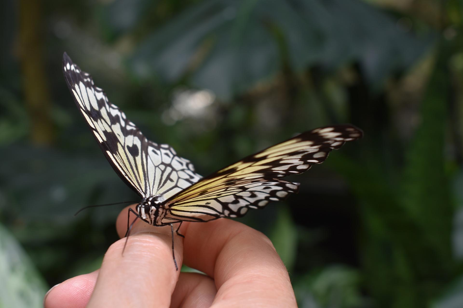 butterfly-3806127_1920.jpg