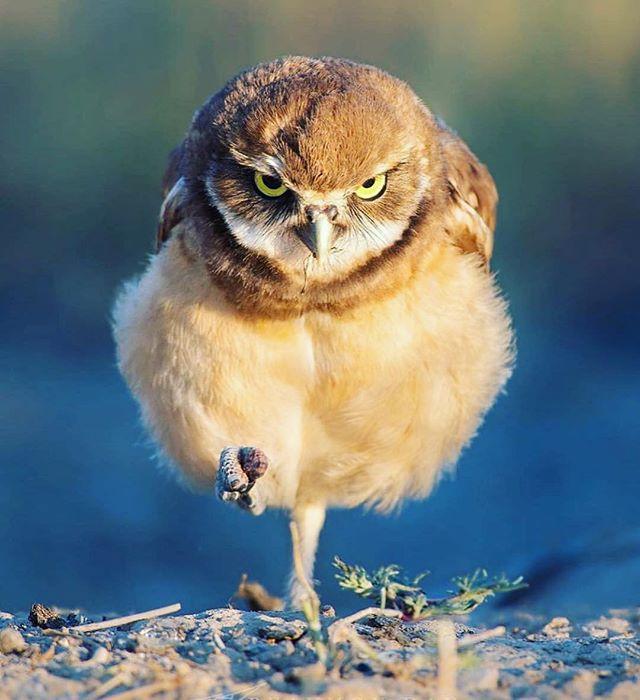 "It's that face you make when the teacher says ""shift your weight to the left leg and pick up your foot"" #mood #standingheadtoknee #bikram #dandayamanajanushirasana #owl @roam"