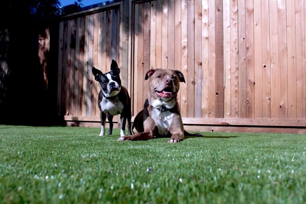 dogs1-1024x683.jpg