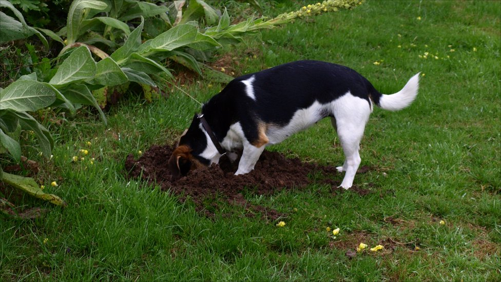 dog-digging.jpg