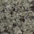 SilverSeaGreen-70x70.jpg