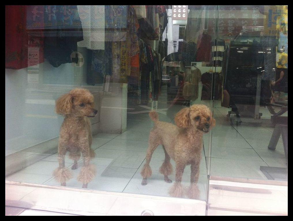 hondjes (1).jpg