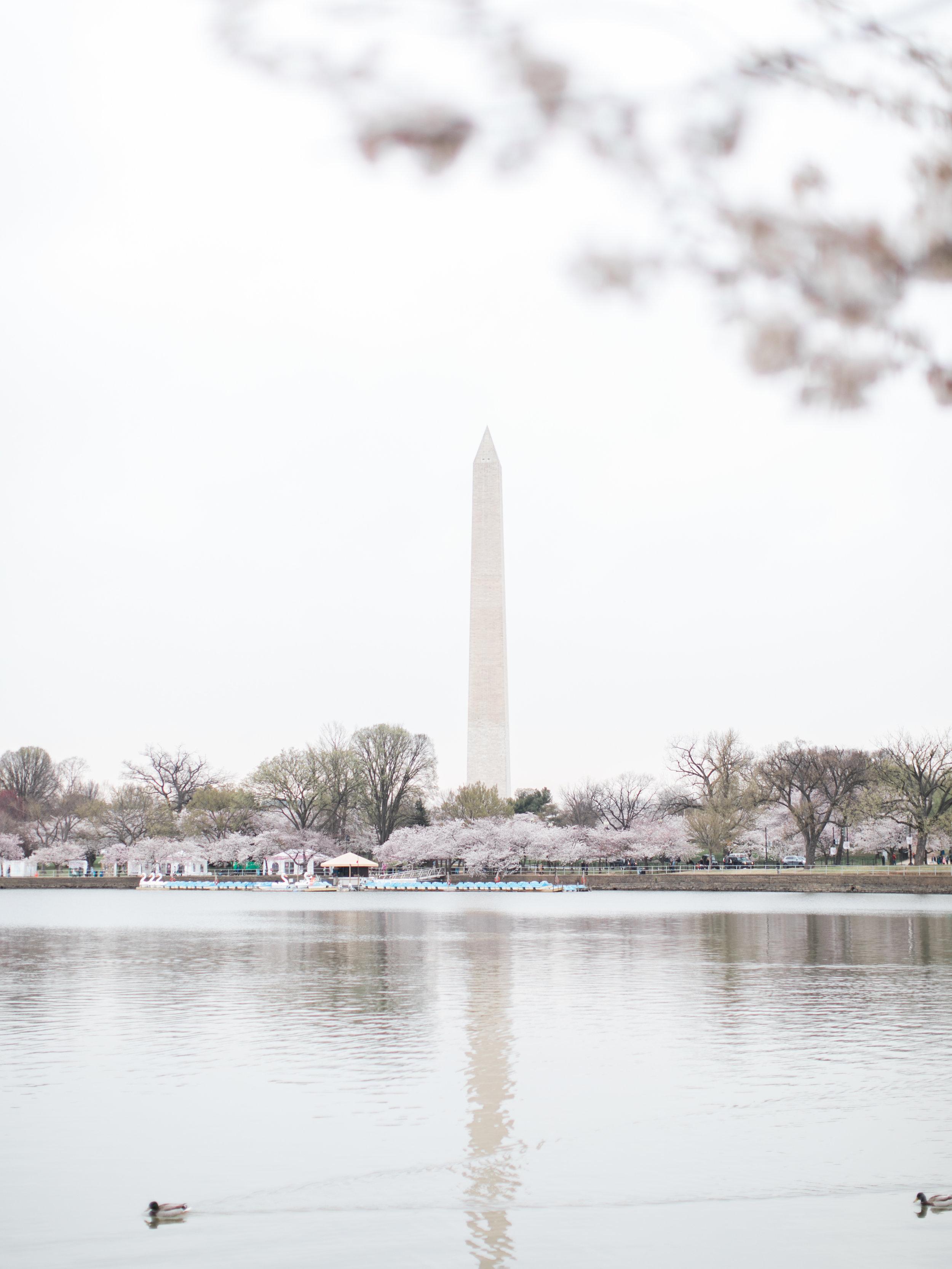 cherry-blossom-engagement-photos33.jpg