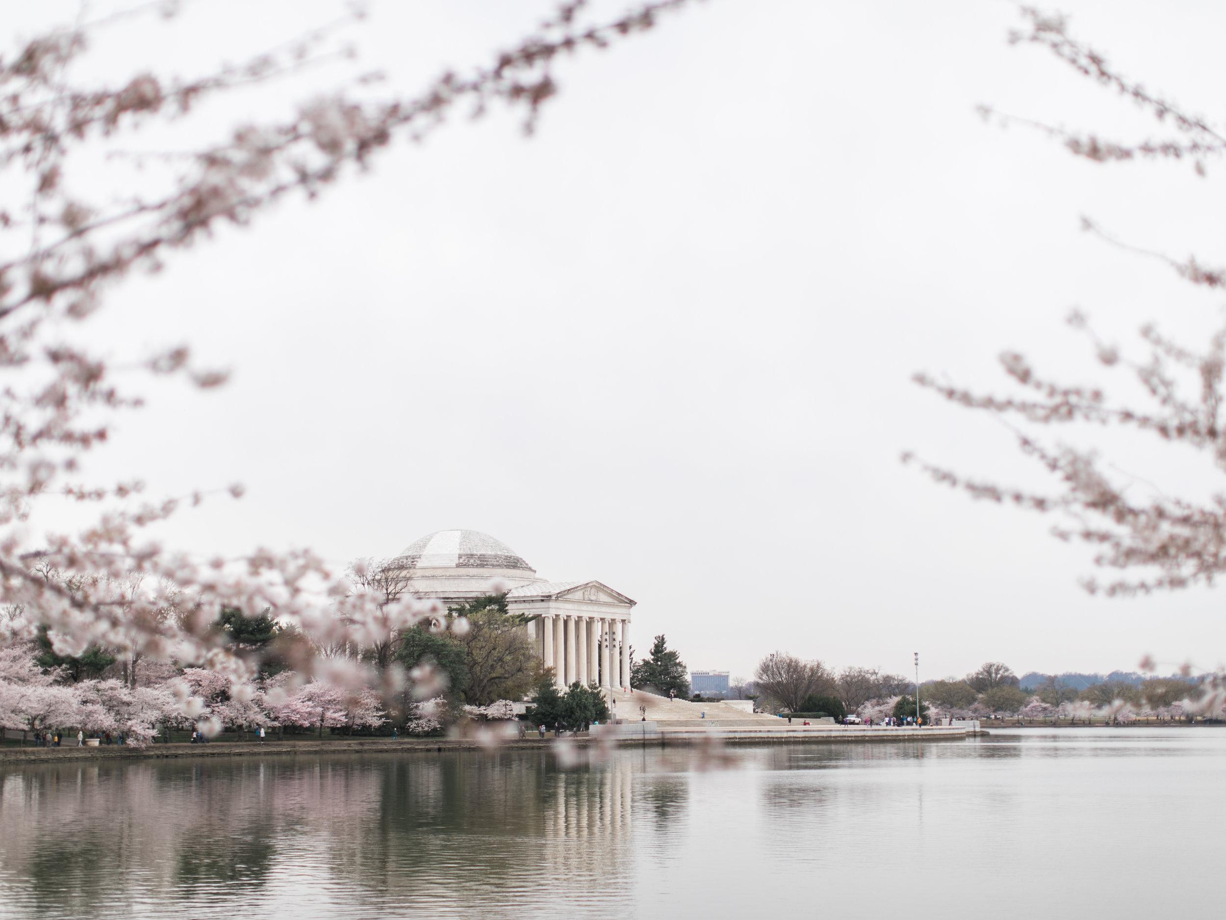 cherry-blossom-engagement-photos41.jpg