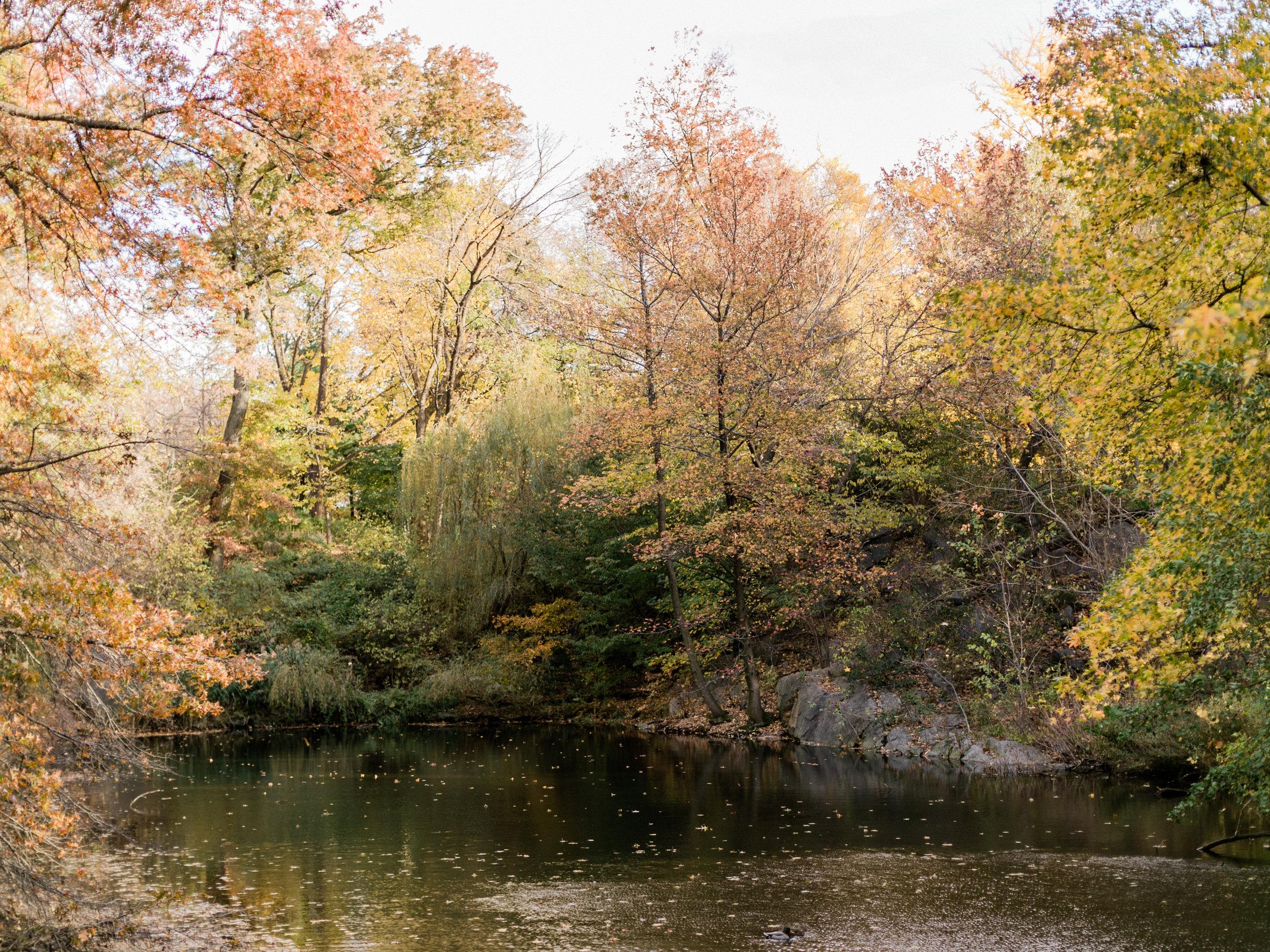 asher-gardner-centralpark-69.jpg