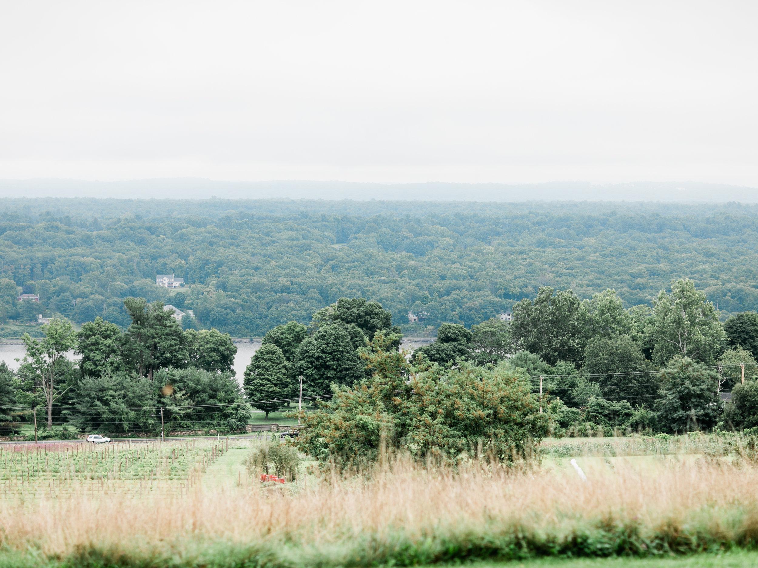 asher-gardner-red-maple-vineyard-0276.jpg