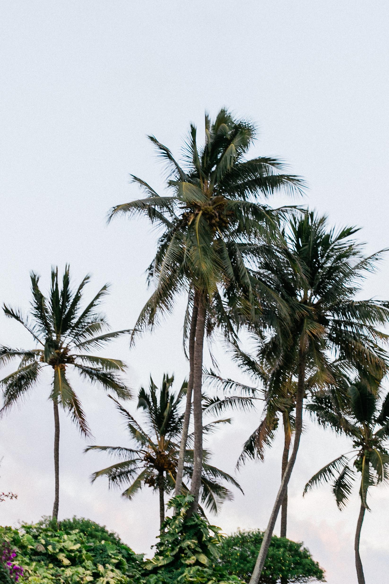 asher-gardner-hawaii-engagement-00017.jpg