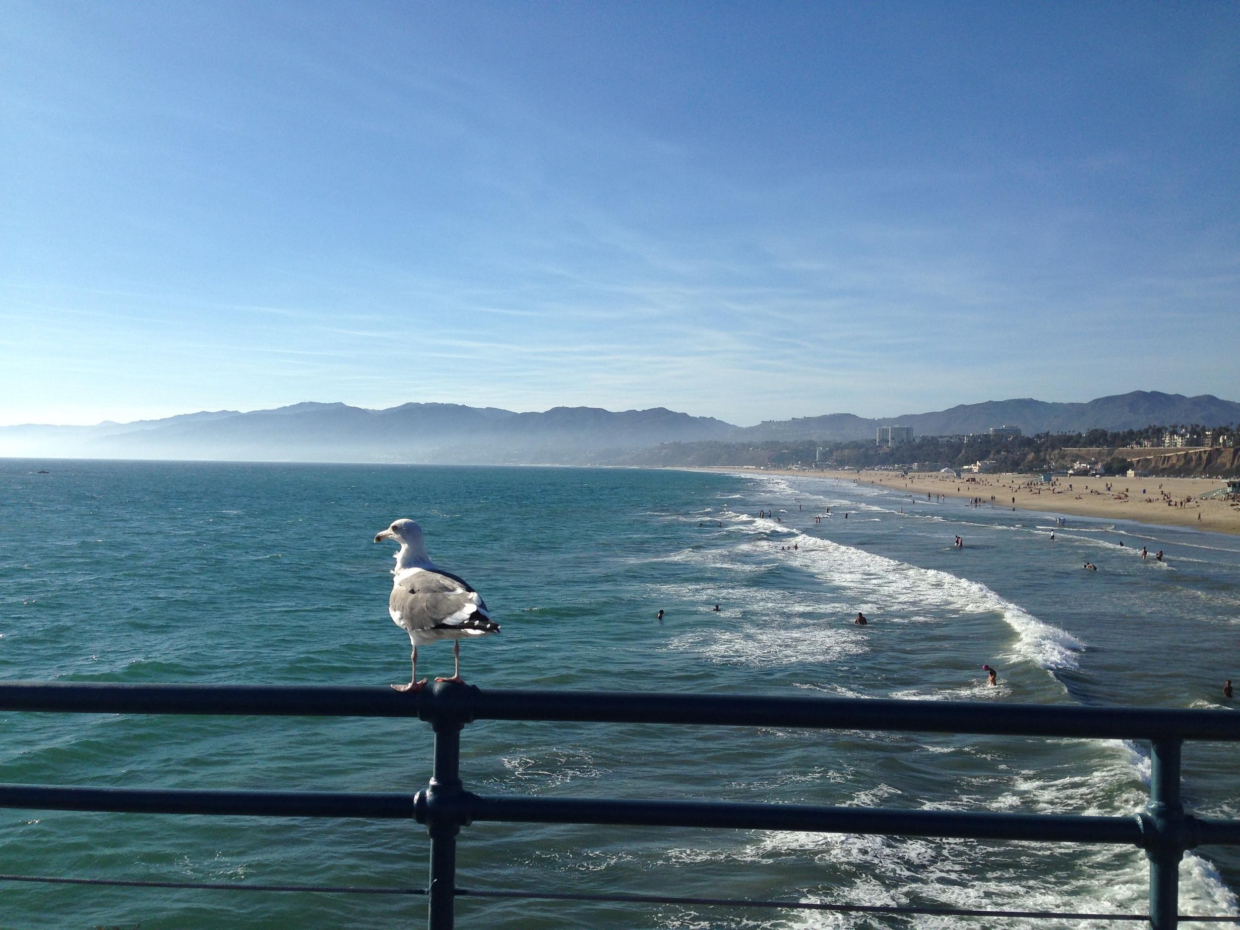 Santa Monica, CA, 9/9/14