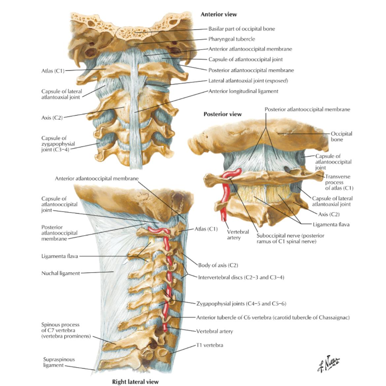 Artroza atlanto a articulației occipitale