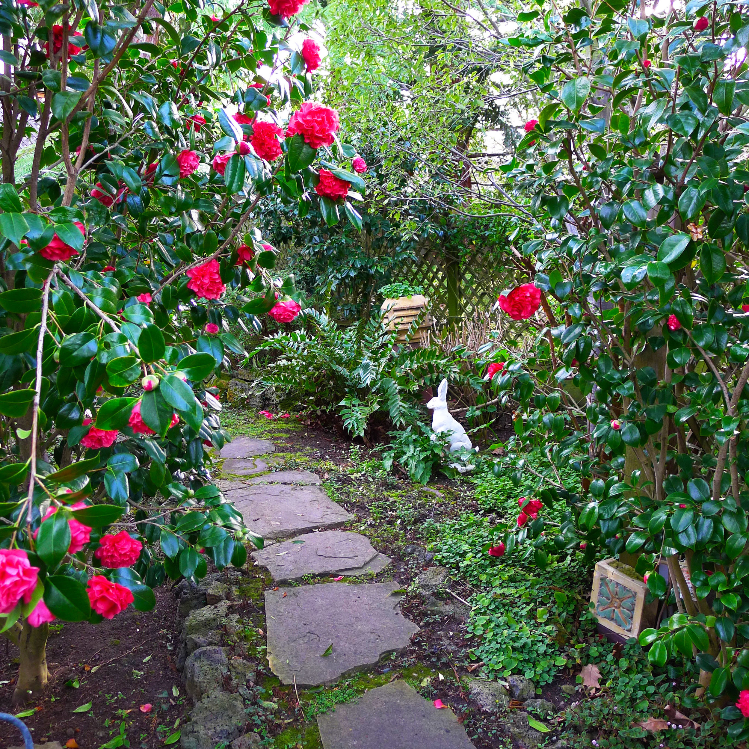 A cheeky rabbit inhabits the garden