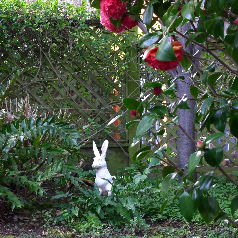 The resident rabbit