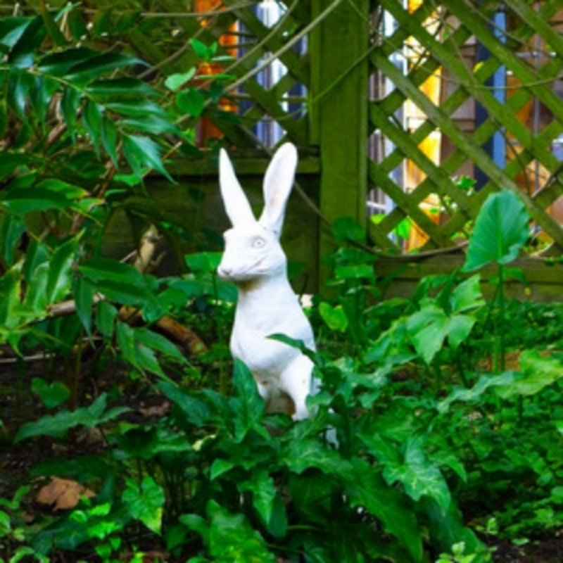 The cheeky rabbit