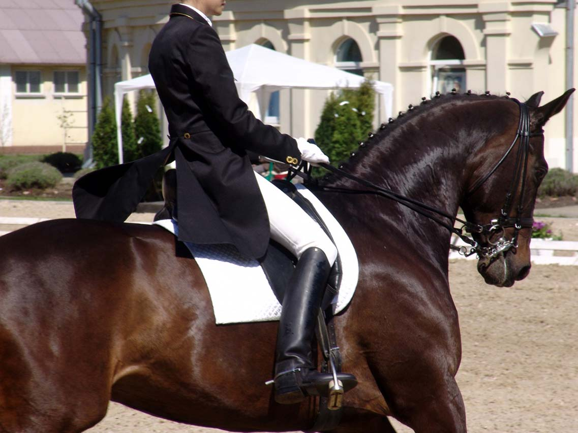 evhorsewoman-on-black-horse-in-competition-1236936381_77.jpg