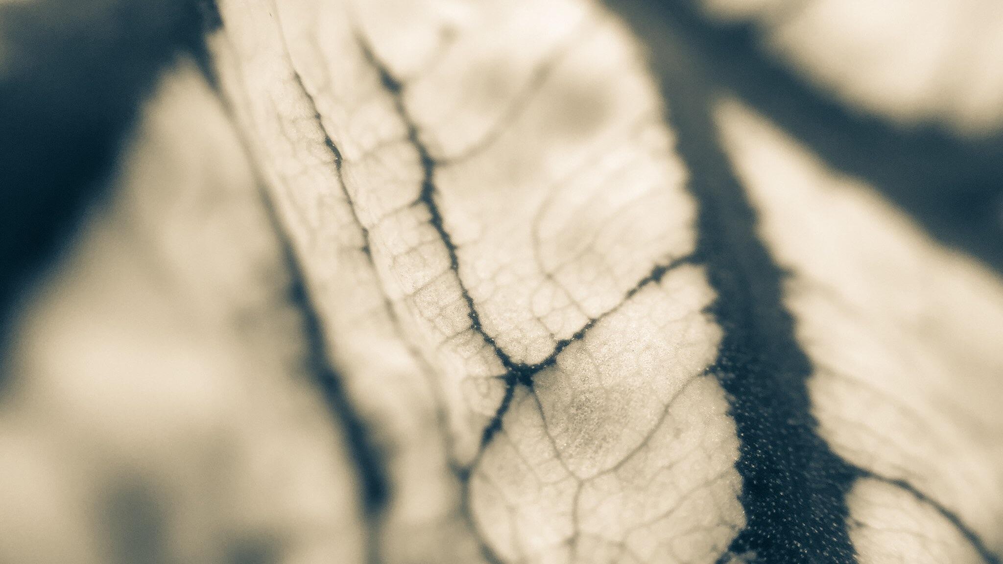 Vasculousus.jpg