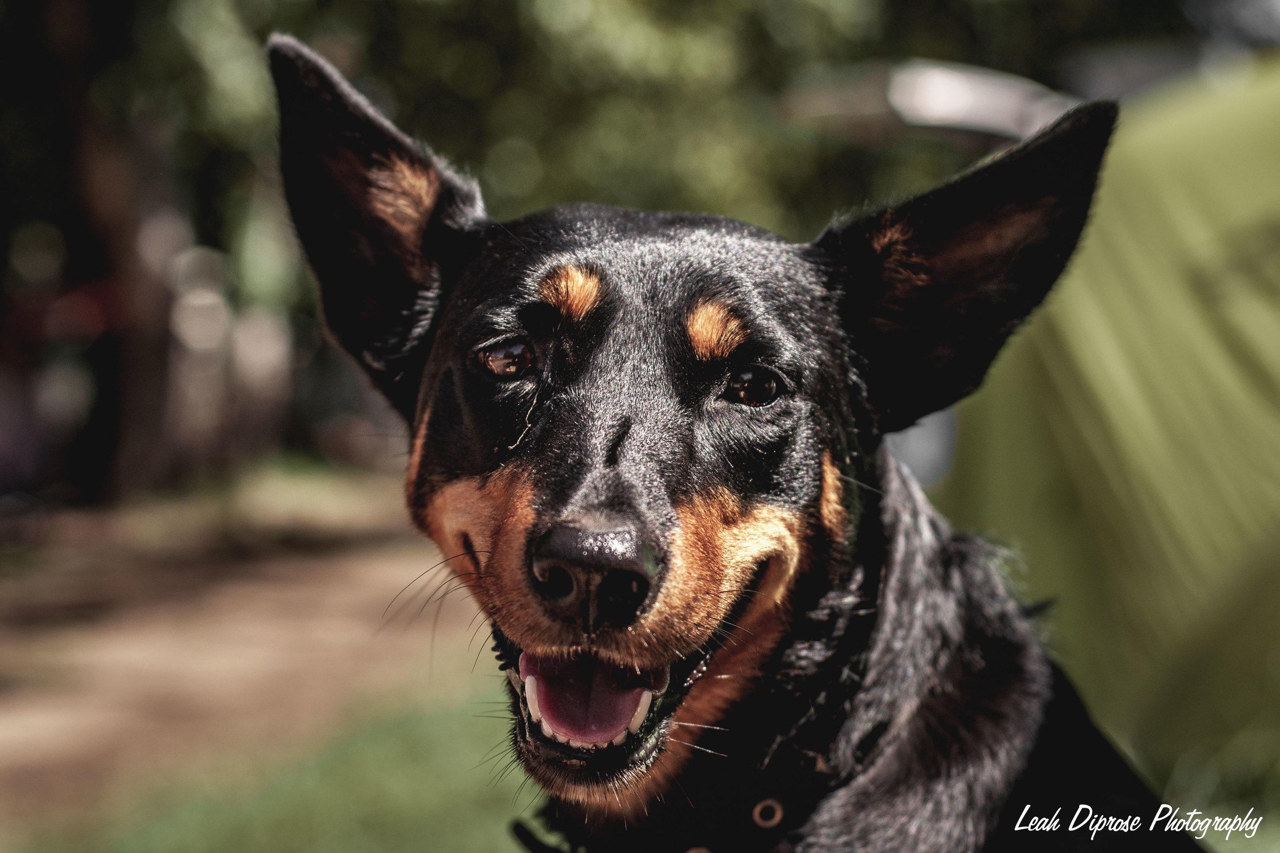 Leah Diprose Photography image-6207.jpg