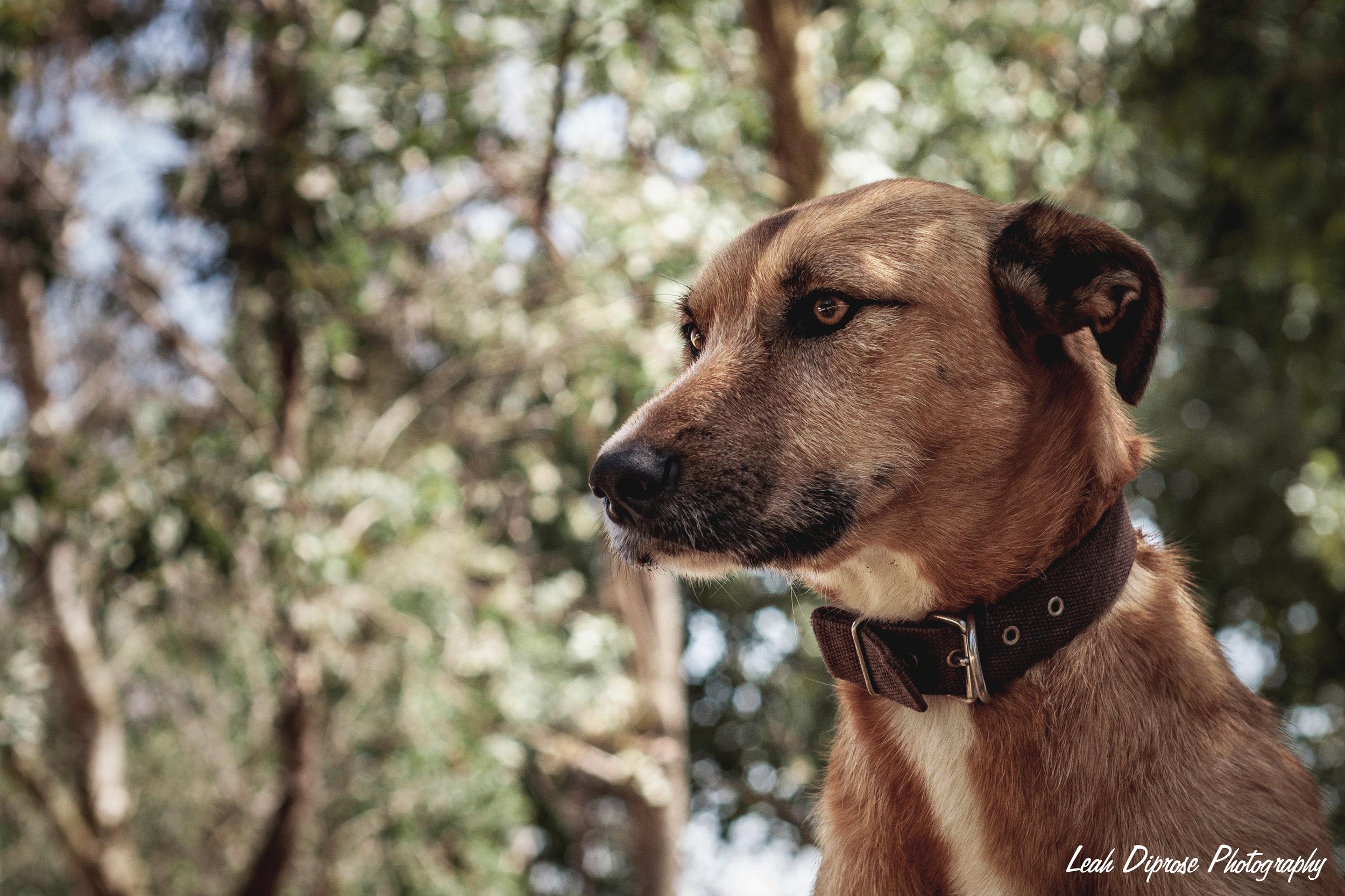 Leah Diprose Photography image-6218.jpg