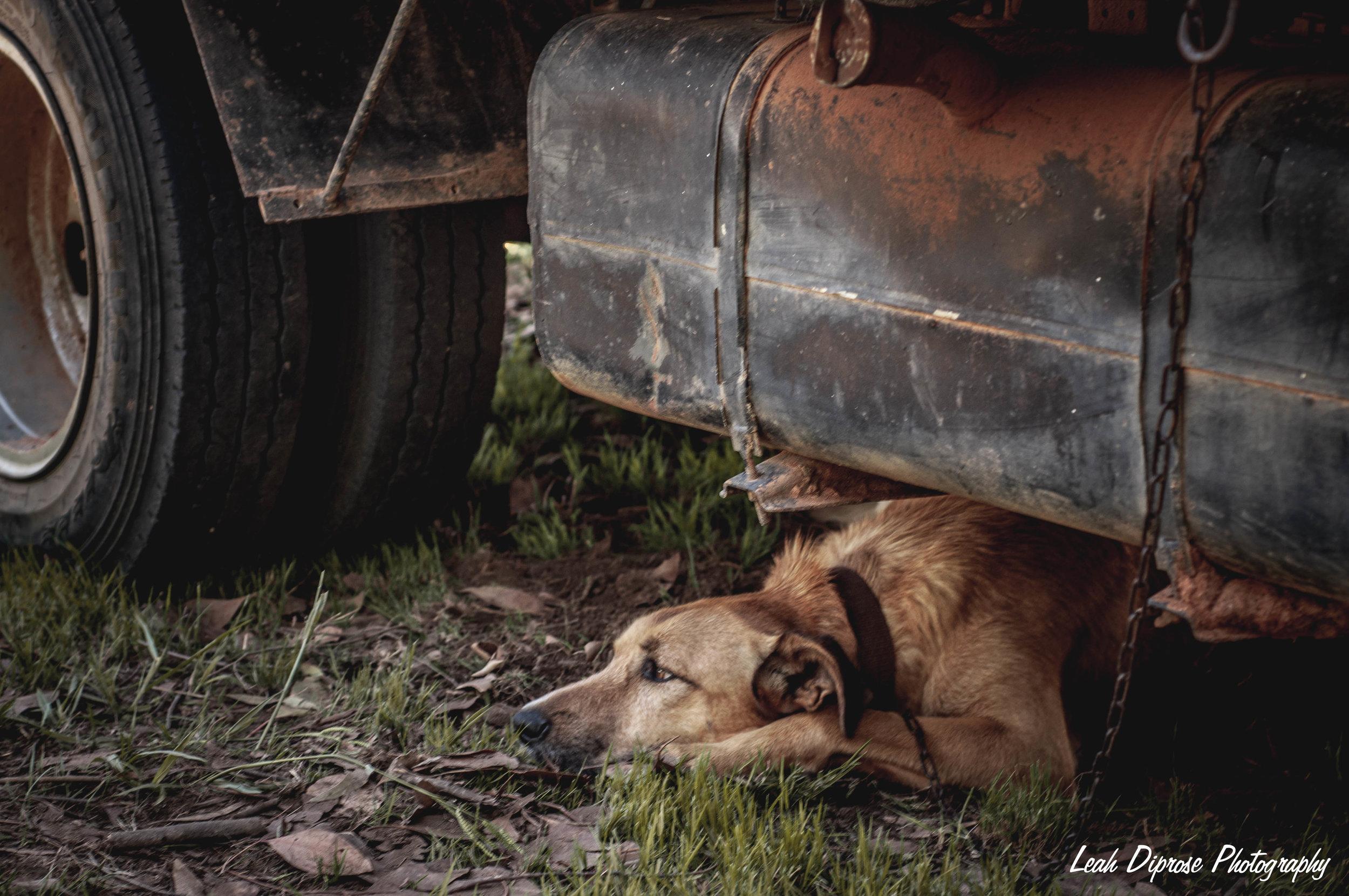 Leah Diprose Photography image-6215.jpg