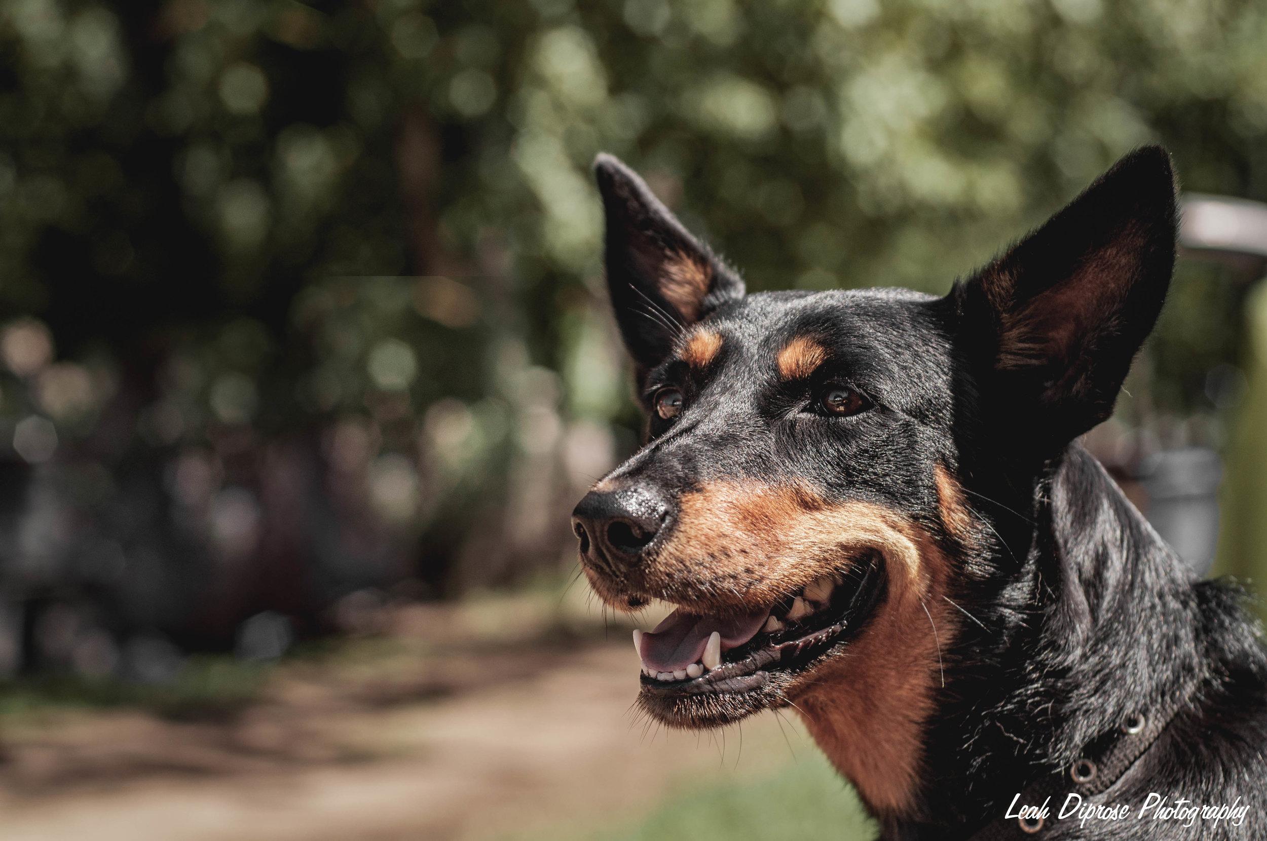Leah Diprose Photography image-6208.jpg