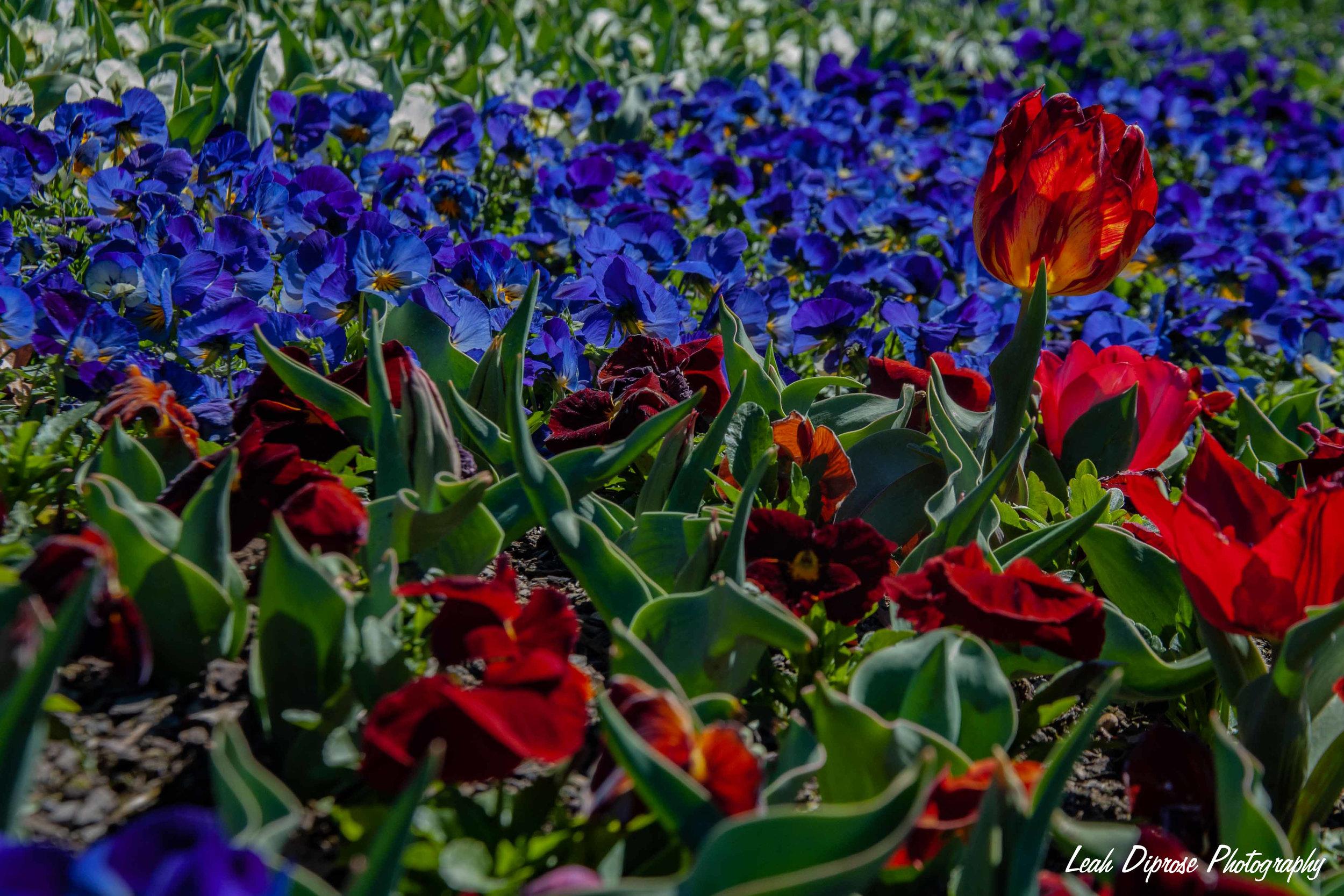 Leah Diprose Photography image-5906.jpg