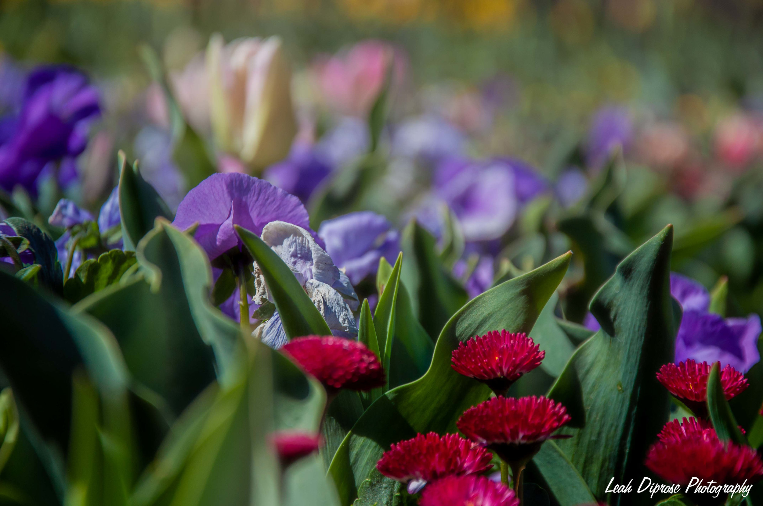 Leah Diprose Photography image-5920.jpg
