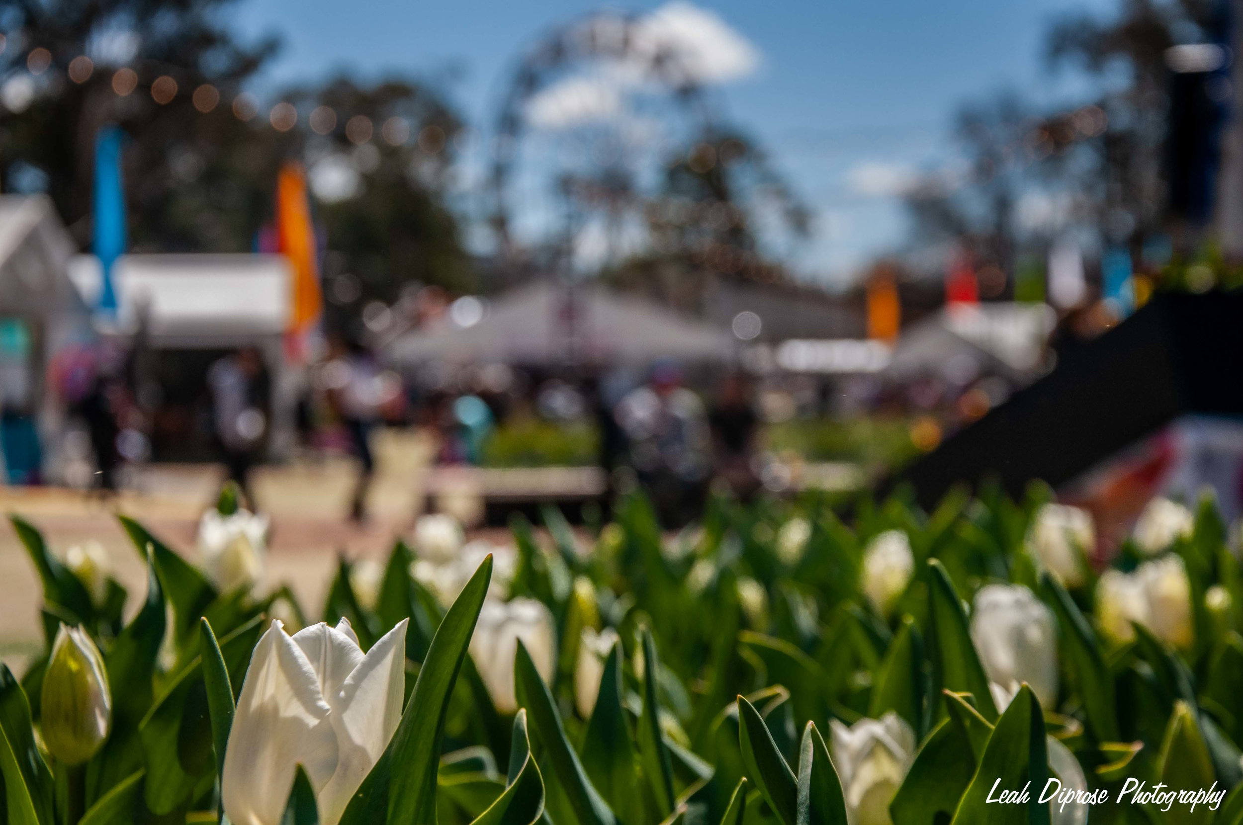 when spring blooms - A floral feast for the eyes takes place in Canberra each year to mark the start of the warmer months, Floriade. Come with me…September 2018