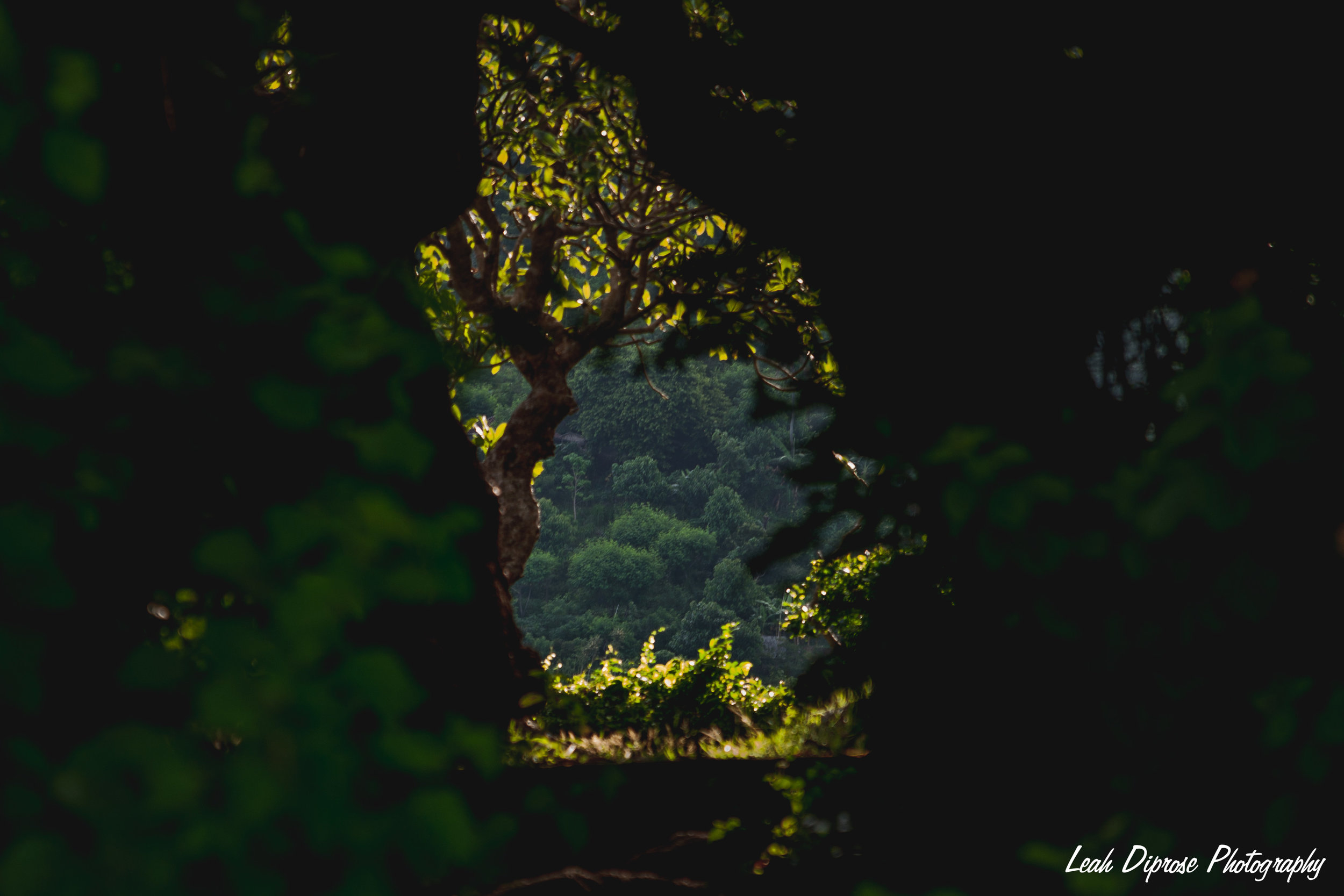 Leah Diprose Photography image-7099.jpg