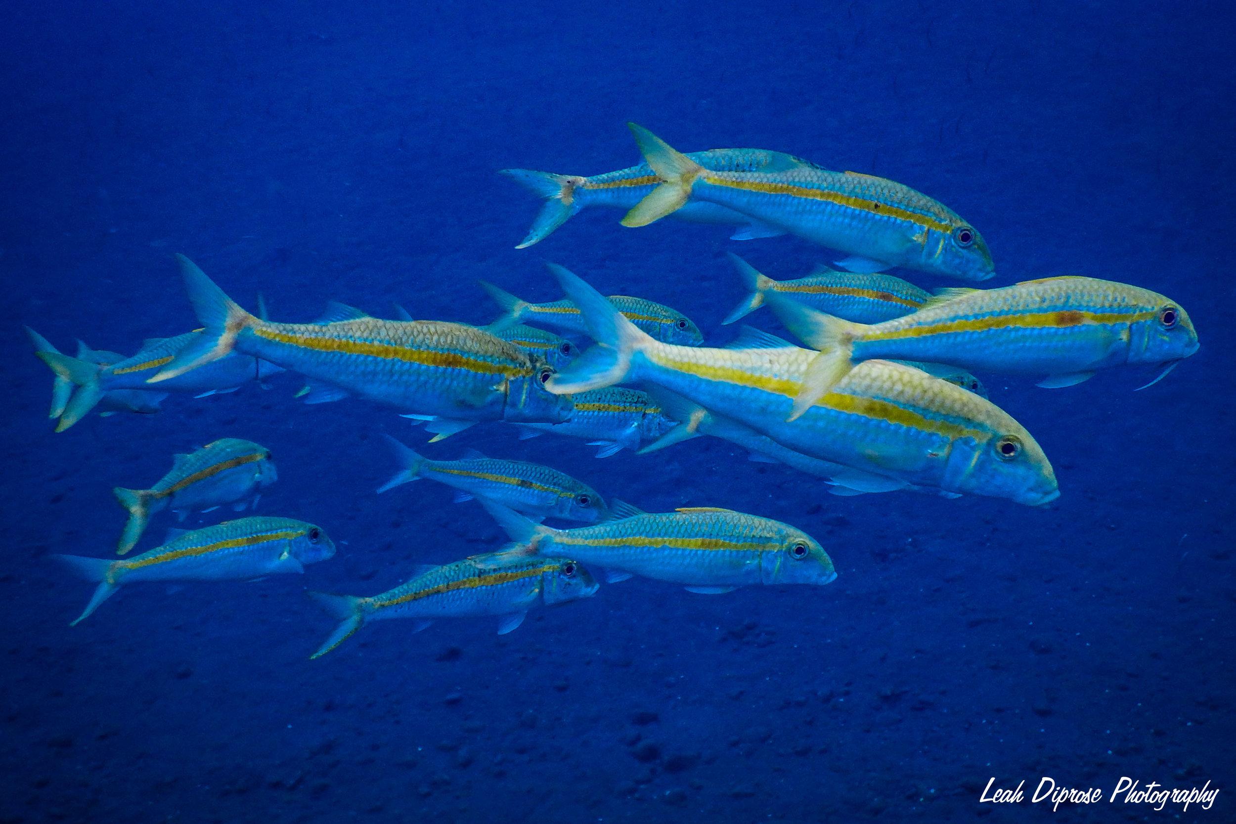 Feeling fishy > series -