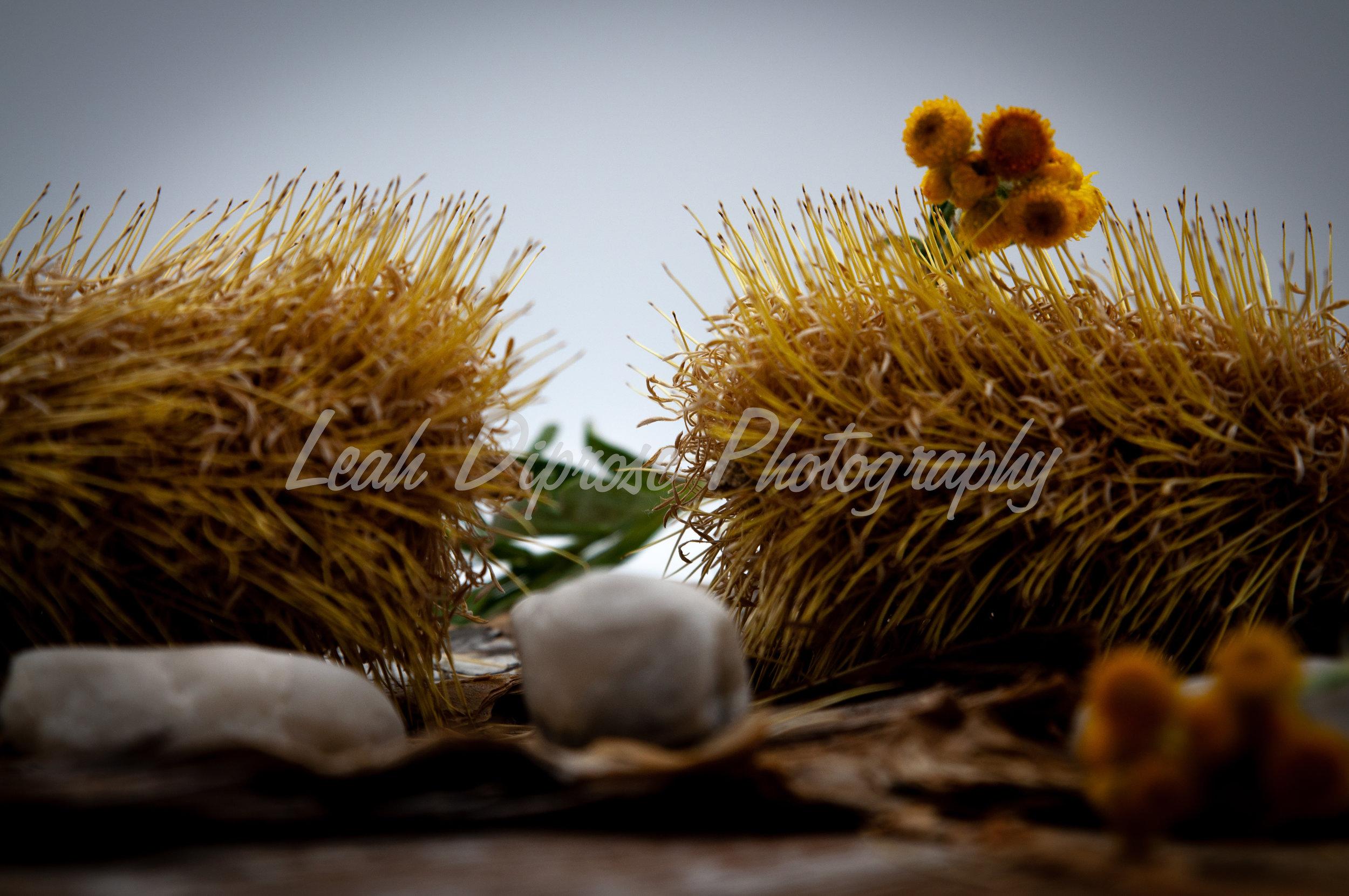 Leah Diprose Photography image-1582.jpg